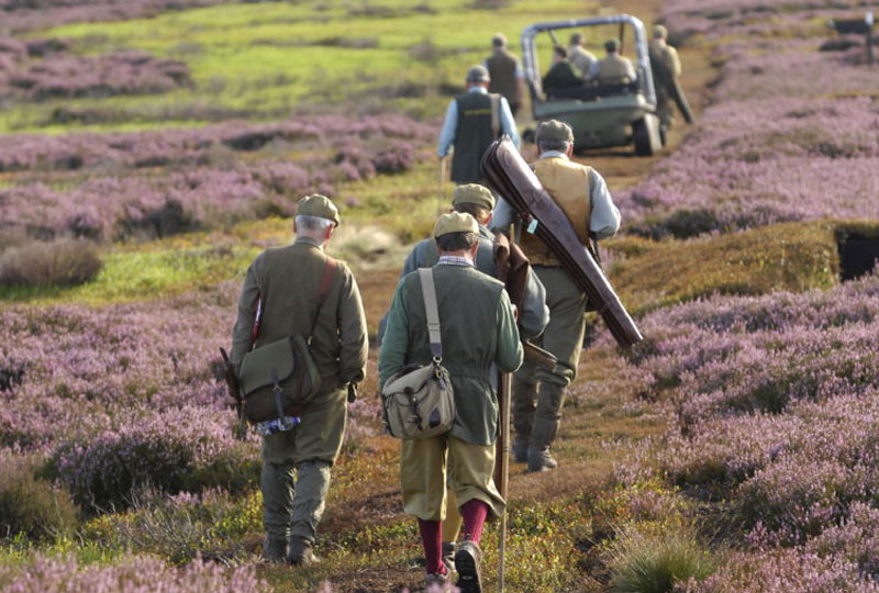 Red Grouse Shoot