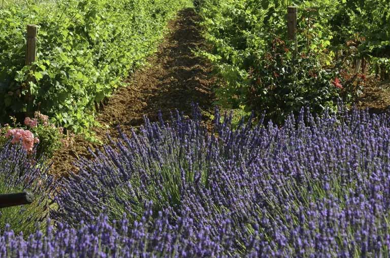 Château Lavender Experience
