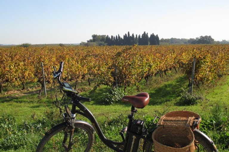 Vineyard & Gastronomy Break