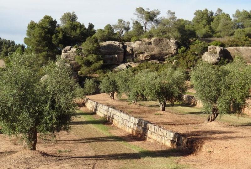Regional Olive Oil Tours