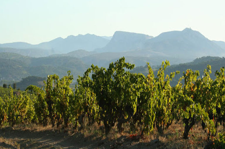 South West Vineyards