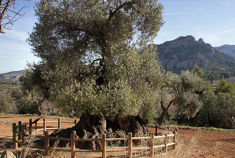 Olive Oil Tours