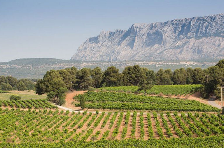 Provence Wine Experience