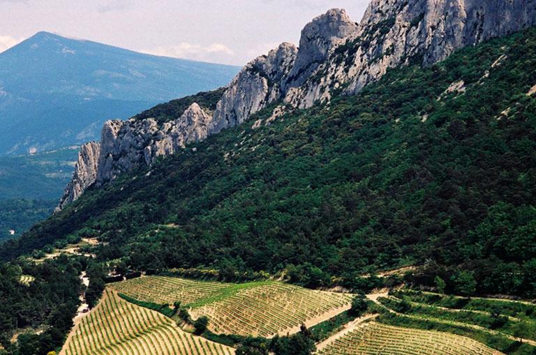 Regional Wine Tours
